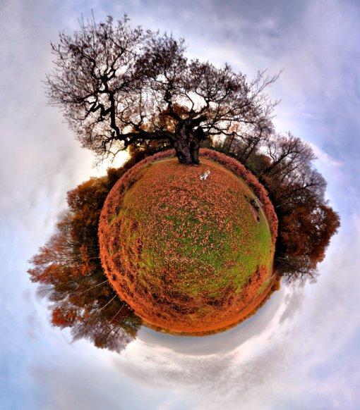 oak tree planet
