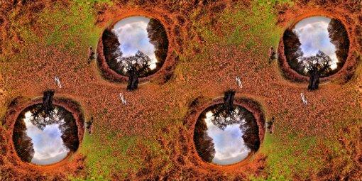 oak_tree_mm_800x400_85
